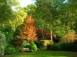 Planting in dry shade jplot Garden Design