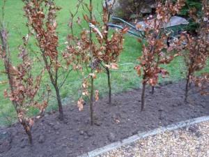 Screens And Hedges Jplot Garden Design