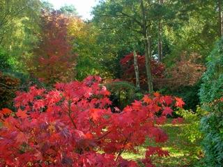 Glorious scarlet autumn foliage