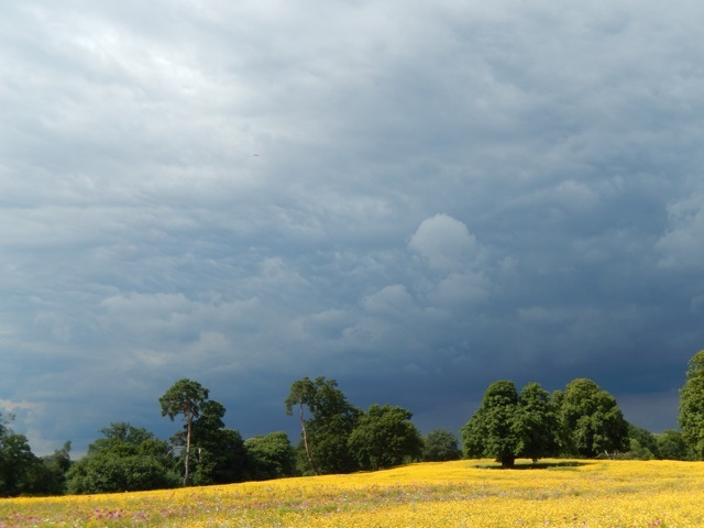 Dark skies over the meadow