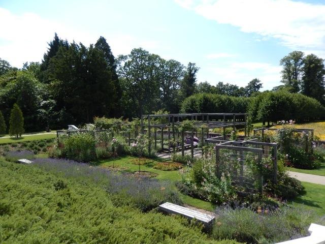 Contemporary rose garden